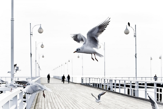 fotografie für Webseiten, Mobiles Fotostudio Berlin, Fotografin jennifer Sanchez, Lanschaftsfotos, Firmengelände, möwen an der ostsee